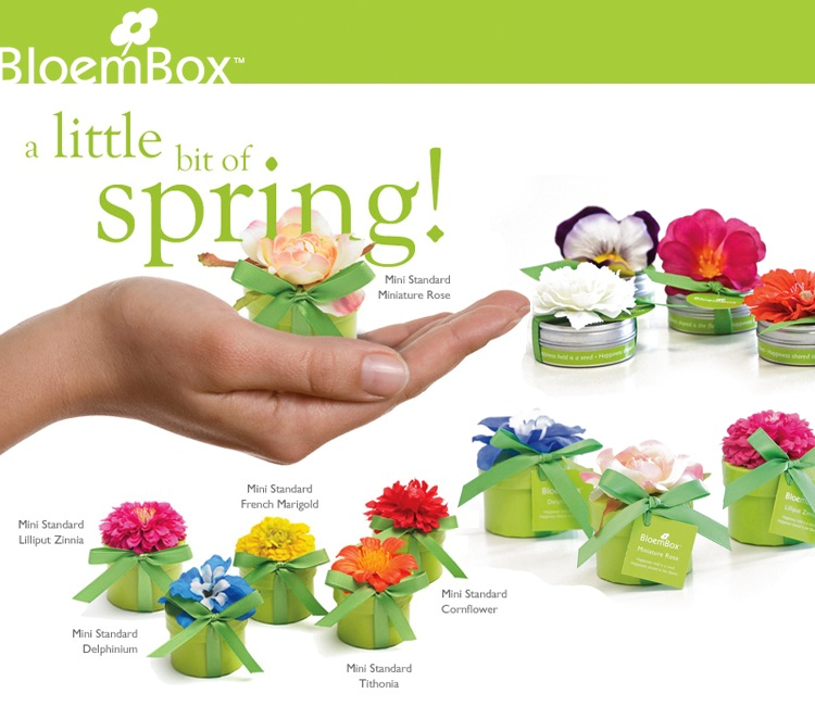Bloem Box, Celebrate Spring